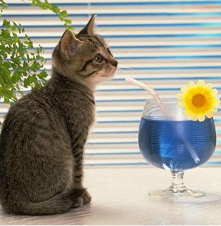 世界上最可爱的动物——猫咪-宠物频道-福州便民网